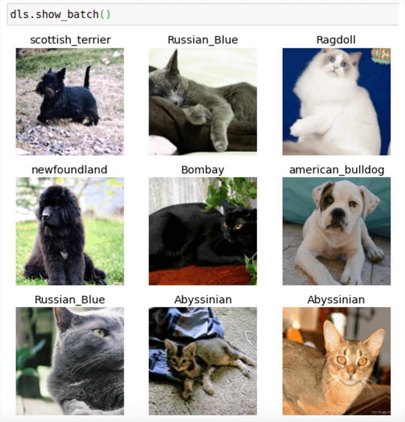 animals deep learning